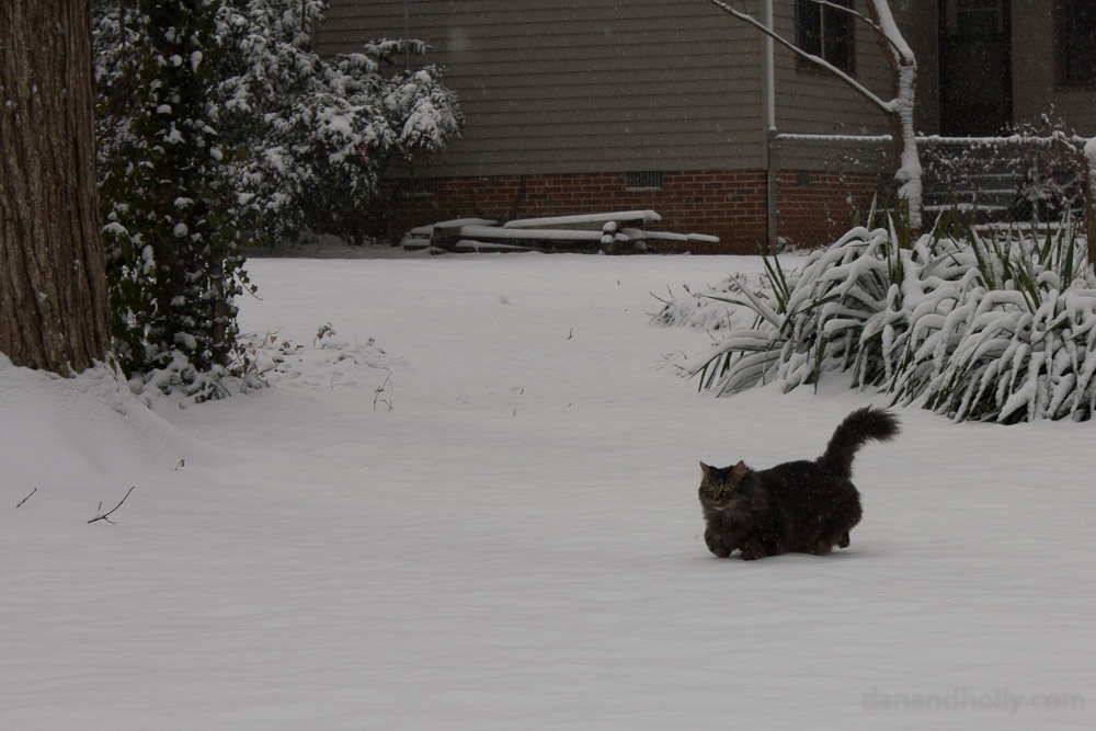 Charlie the snow cat